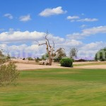 "The ""lone tree"" at Lone Tree Golf Club"